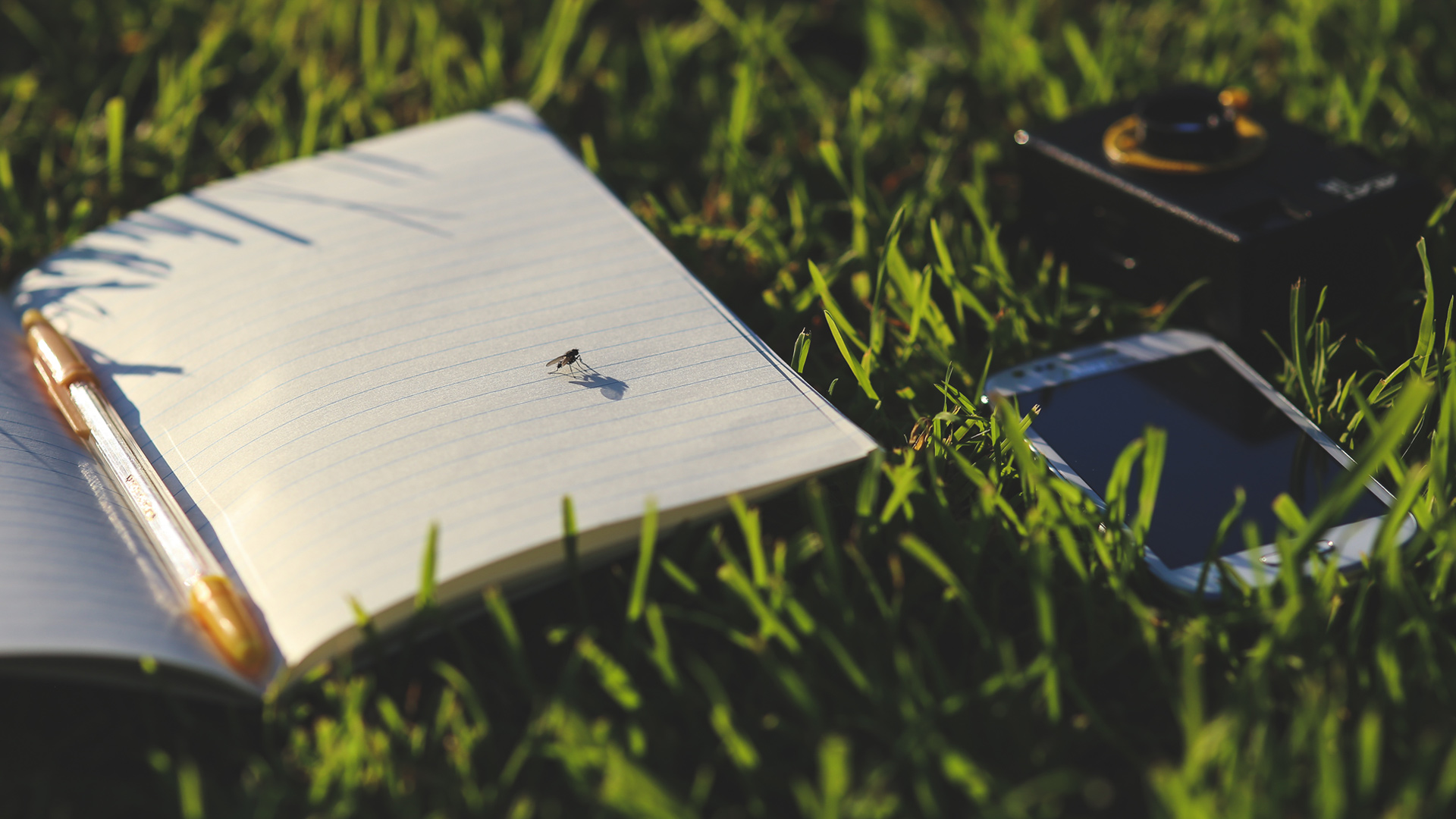 Diary in grass with phone