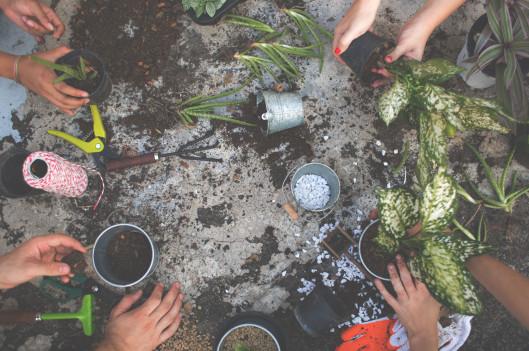 hands of group of people gardening