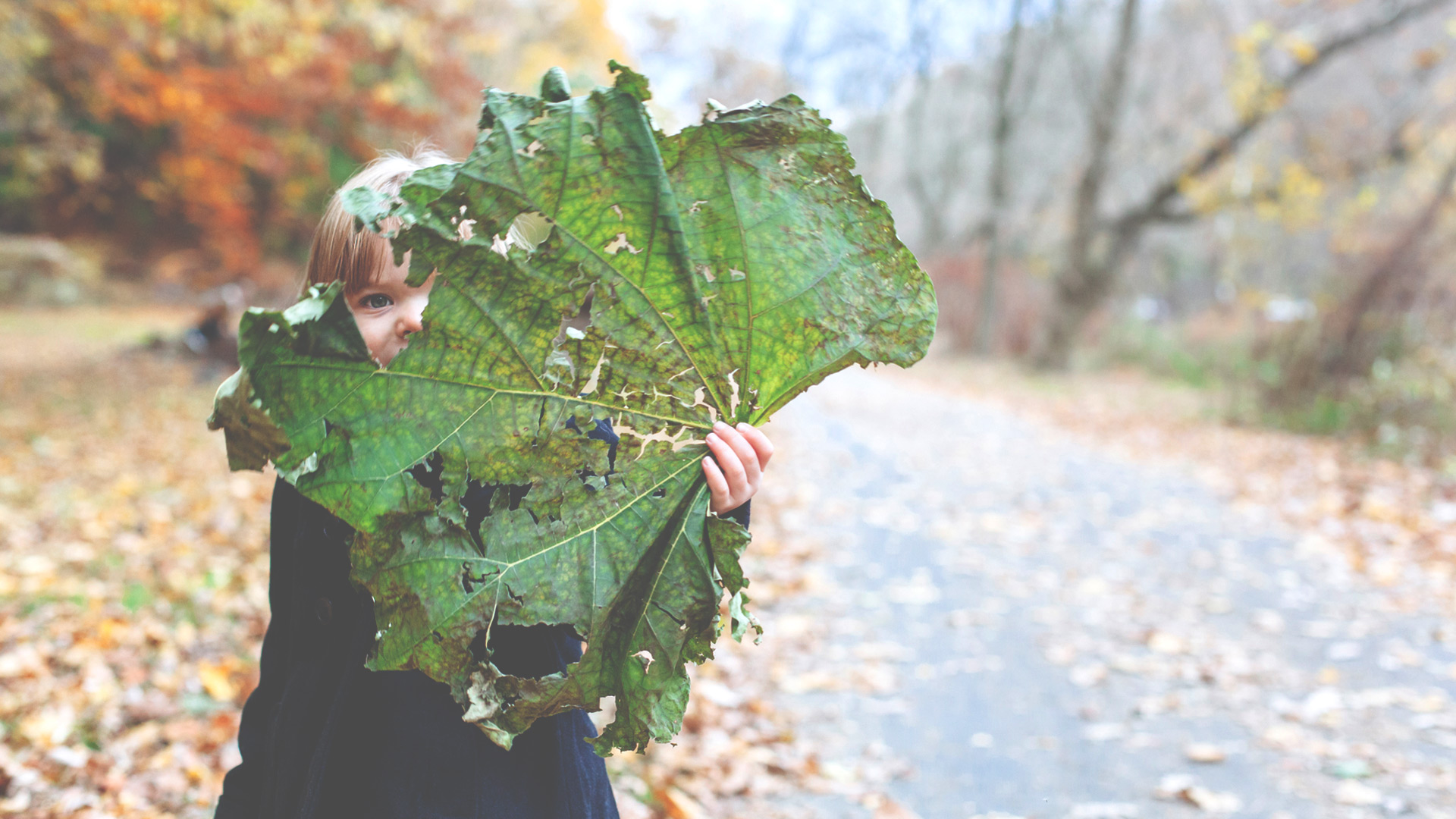 little girl hides behind big leaf