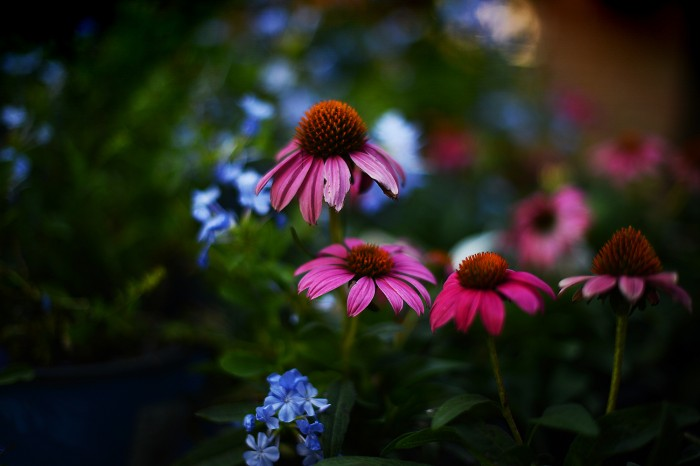 karenwalrondflowers