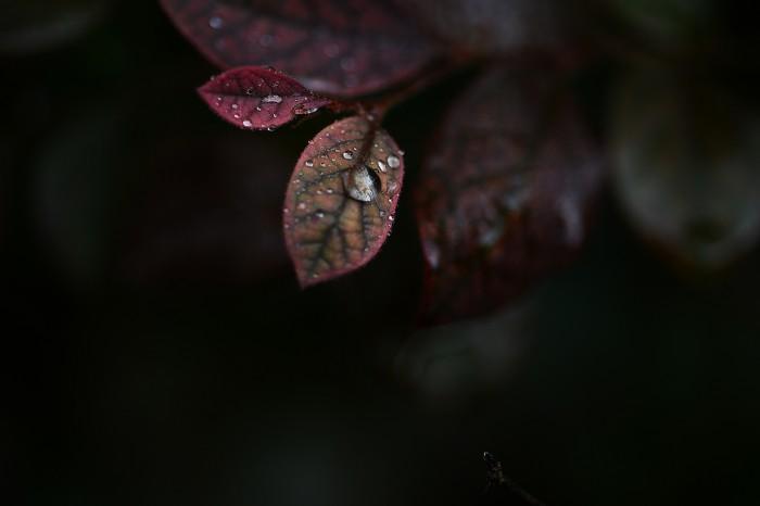 karenwalrondwinterfoliage