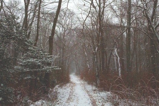 Snow covered road in nature