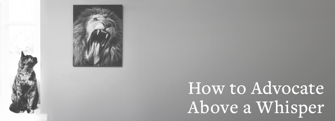 cat staring at picture of lion roaring | How to Advocate Above a Whisper