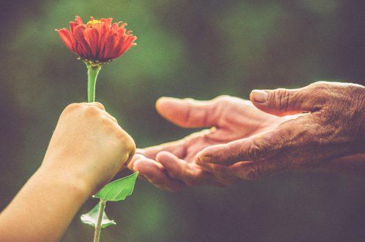 handing elderly person a flower
